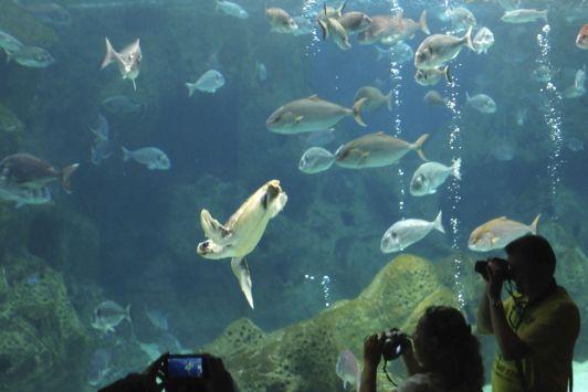 Аквариум, расположенный недалеко от Гувеса, - одно из самых популярных мест среди туристов