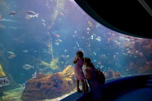 Критский Аквариум CRETAQUARIUM в Гурнесе недалеко от Ираклиона - один из крупнейших в Европе