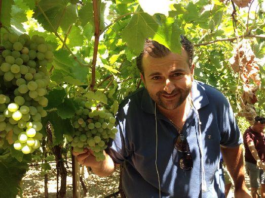 На Крите произрастает 4 сорта винограда: из Вилана делают белое вино, из Котсифали и Мандилари  розовое и красное, из Лиатико сухие и сладкие красные вина